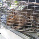 Maine Wildlife Management Squirrel Removal Hampden Maine