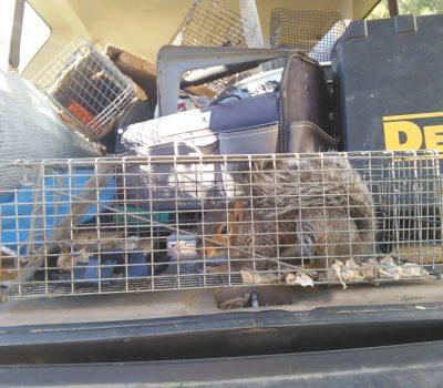 Common Squirrel Complaints
