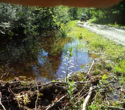 Beaver Removal Inspection in Maine